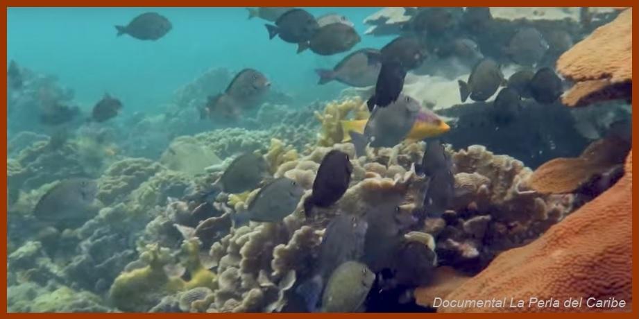Los Corales de Varadero como Patrimonio Natural de la Humanidad