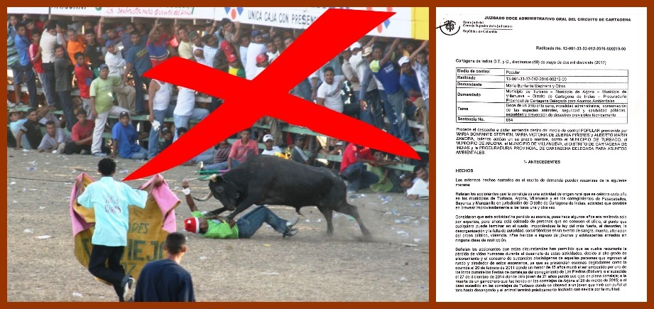Alcaldes de Turbaco y Arjona, a evitar que los toros sufran durante las Fiestas de Corralejas