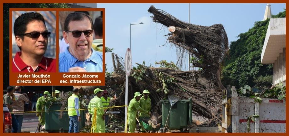«Evaluamos y es posible rescatar nuestro árbol de caucho»: director del EPA