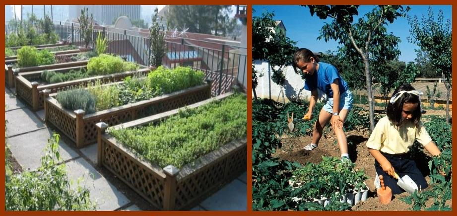 La agricultura urbana orgánica, una opción para reactivar la economía