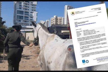 Distrito, obligado censar a los animales callejeros y construirles un centro de bienestar