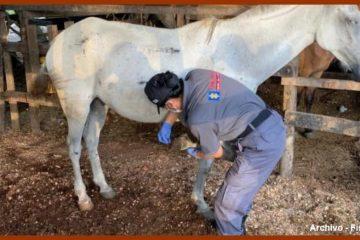 Procuraduría conmina al Distrito a tomar medidas inmediatas contra el maltrato a caballos cocheros