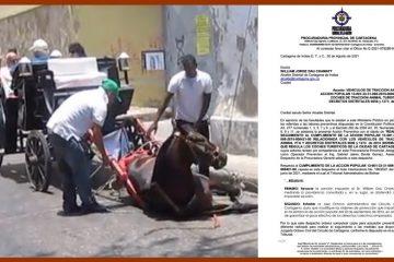 Con notas de prensa y oficio de la Procuraduría impulsan proceso contra maltrato animal en Cartagena