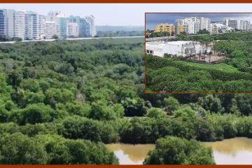 Denuncian que en la Boca del Parrao continúan «talando los manglares y rellenando el cuerpo de agua»